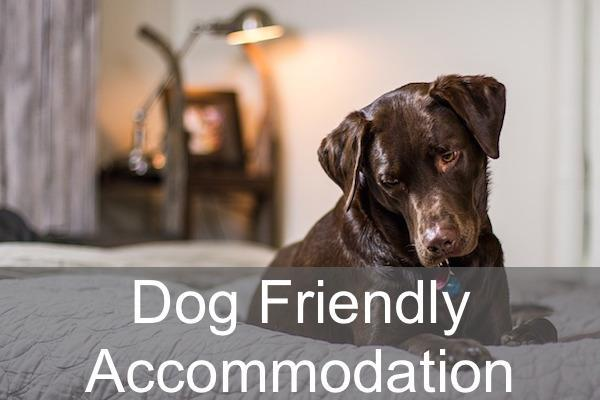 Dog Friendly accommodation in the New Forest