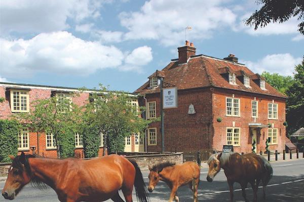 New Forest ponies walking past the Bell Inn in the forest at Bramshaw
