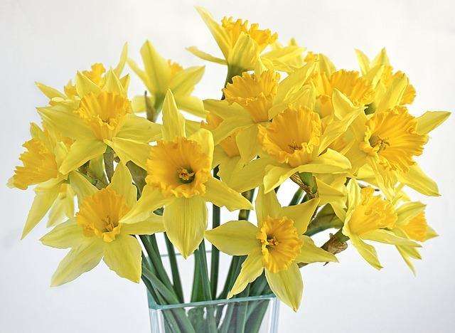 Yellow daffodils in your Easter Garden