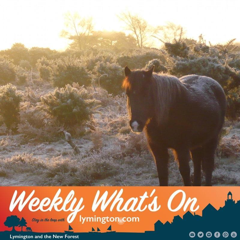 What's on in the New Forest this weekend?