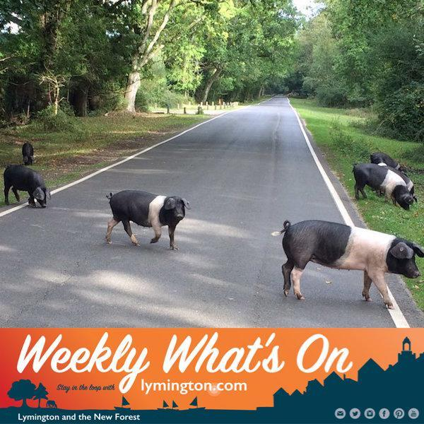 pannage New Forest What's On Weekly email newsletter