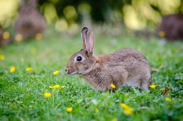 Rabbit with long ears on green grass