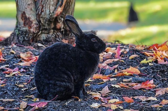 dark rabbit under a tree in Autumn