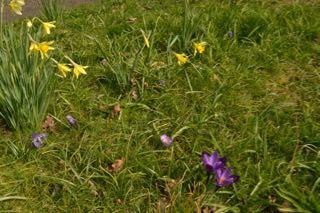 debby lockey easter garden colour complementary scheme