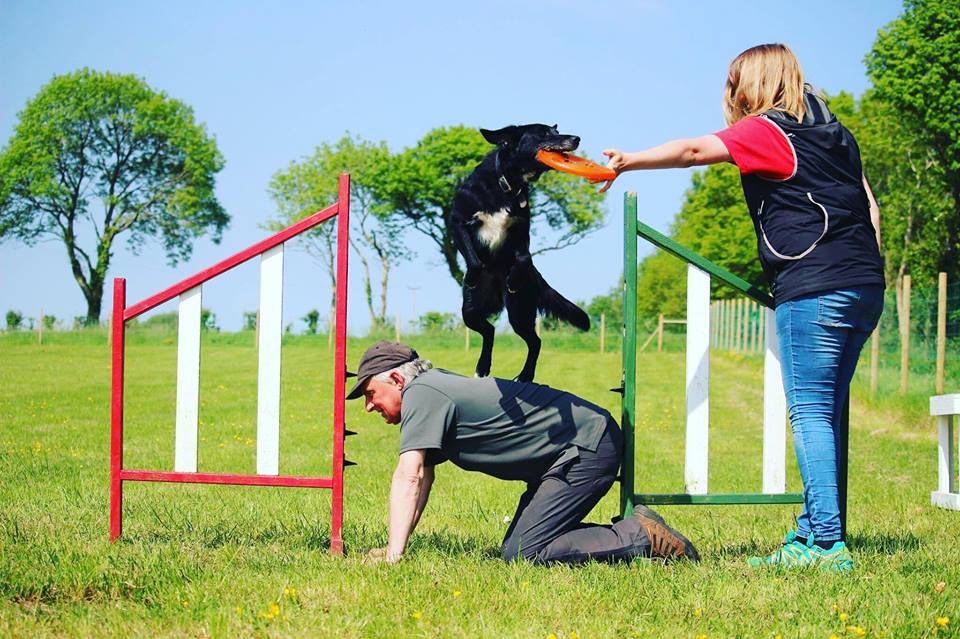 Dog Training and Behaviour at Dogstival New Forest Hampshire