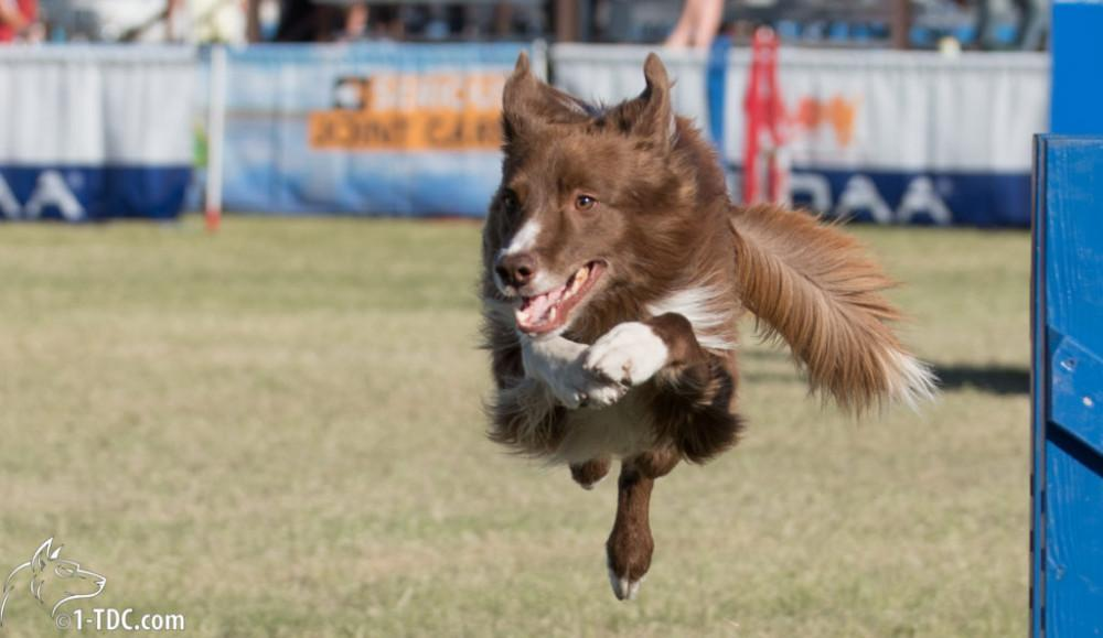 Dogstival and doggy acrobatics
