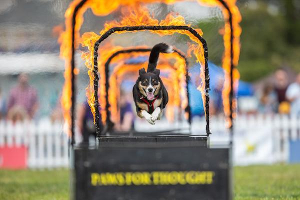 Dogstival 2019 in the arena