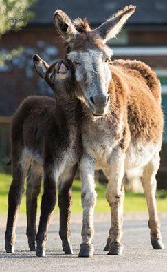 Donkeys are an enduring favourite feature of the New Forest