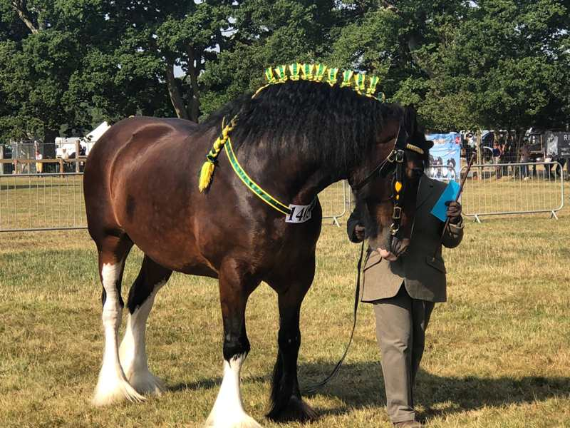 Fabulous Shire horses on show at the 2018 New Forest Show