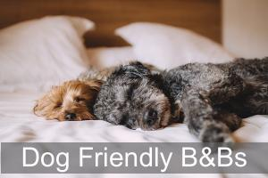 Dog Friendly Bed & Breakfasts