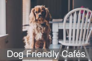 Dog Friendly Cafés