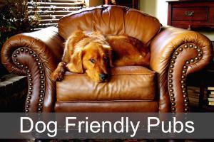 Dog Friendly Pubs