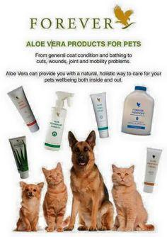 Aloe vera products for pets