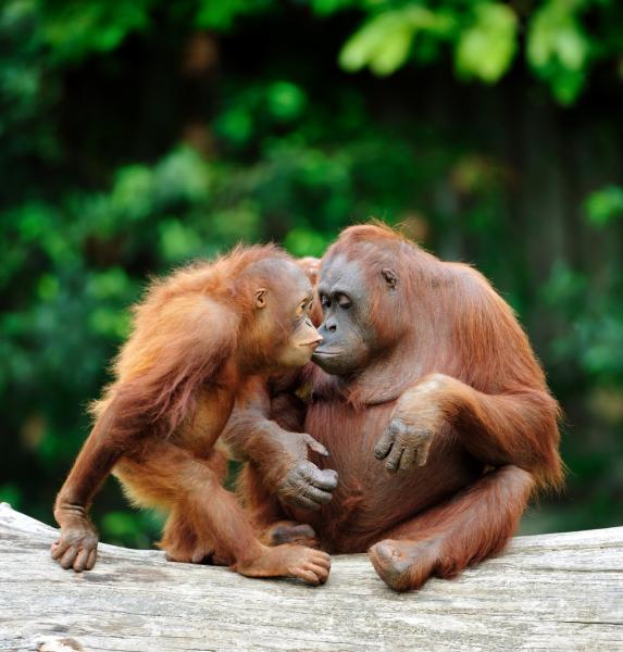 Dream Challenges Trek Borneo 2022