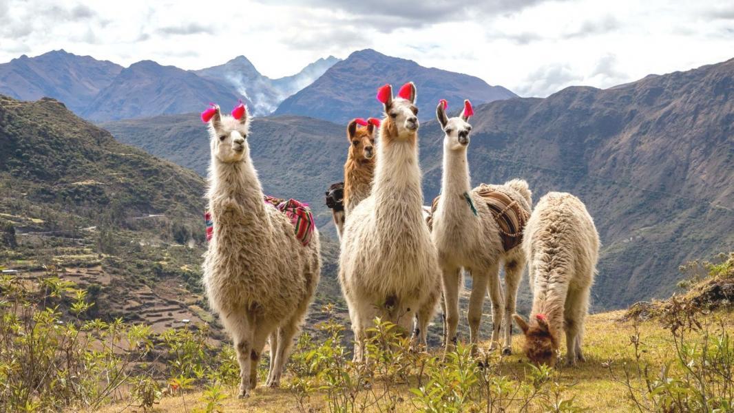 The Inca trail trek 2022