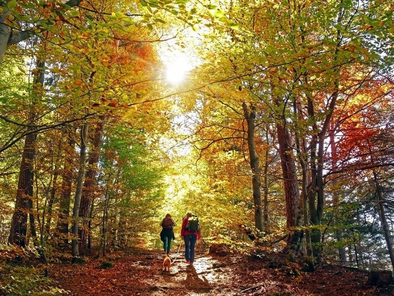 New Forest Walking and Cycling Festival 2021